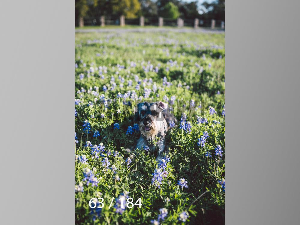 bluebonnet-063.jpg