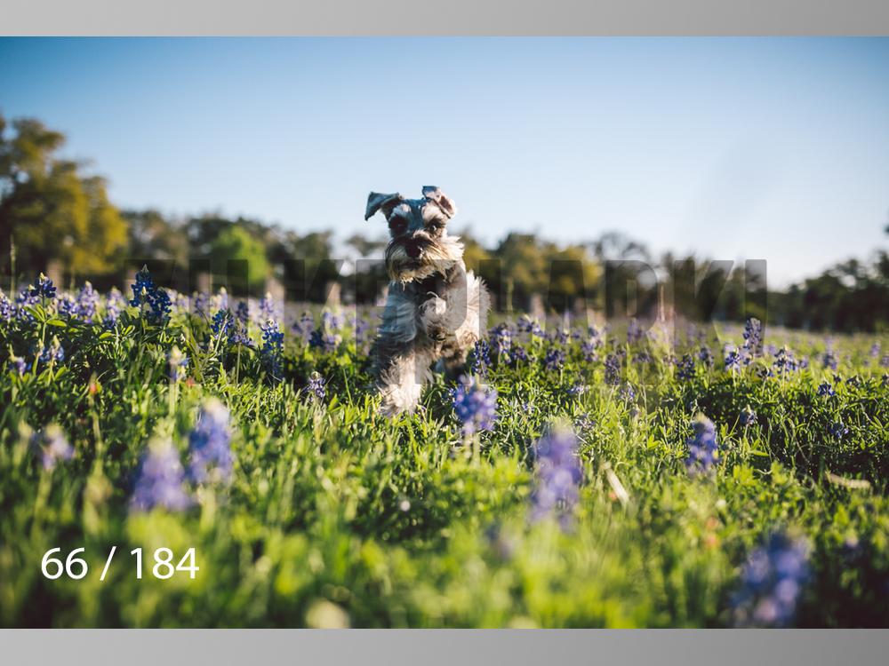 bluebonnet-066.jpg