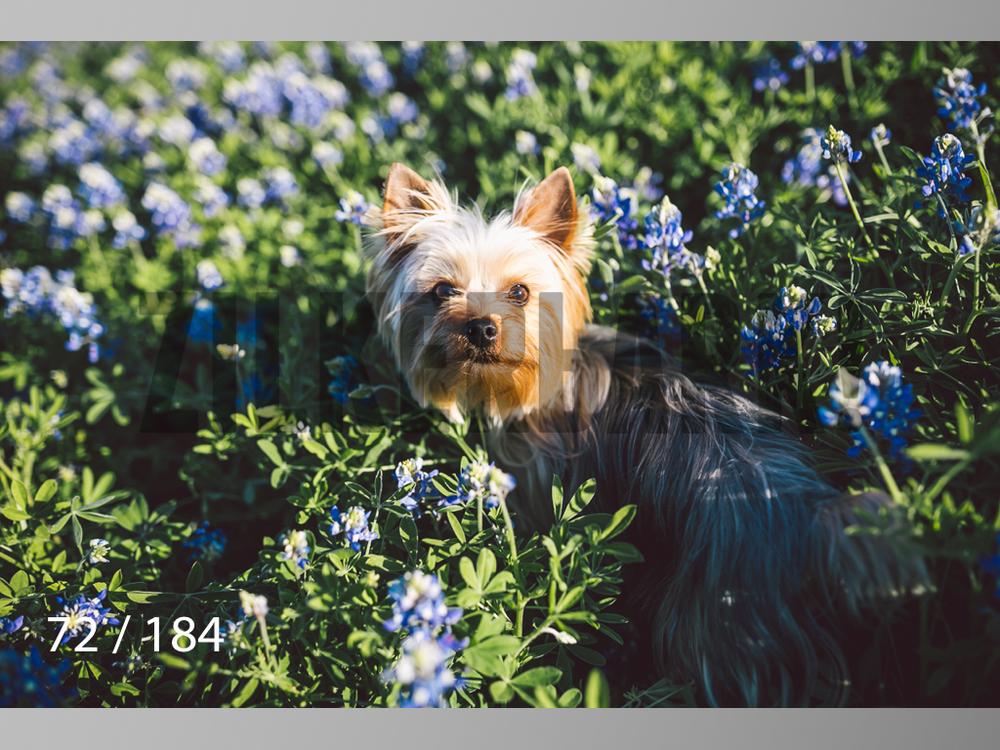 bluebonnet-072.jpg