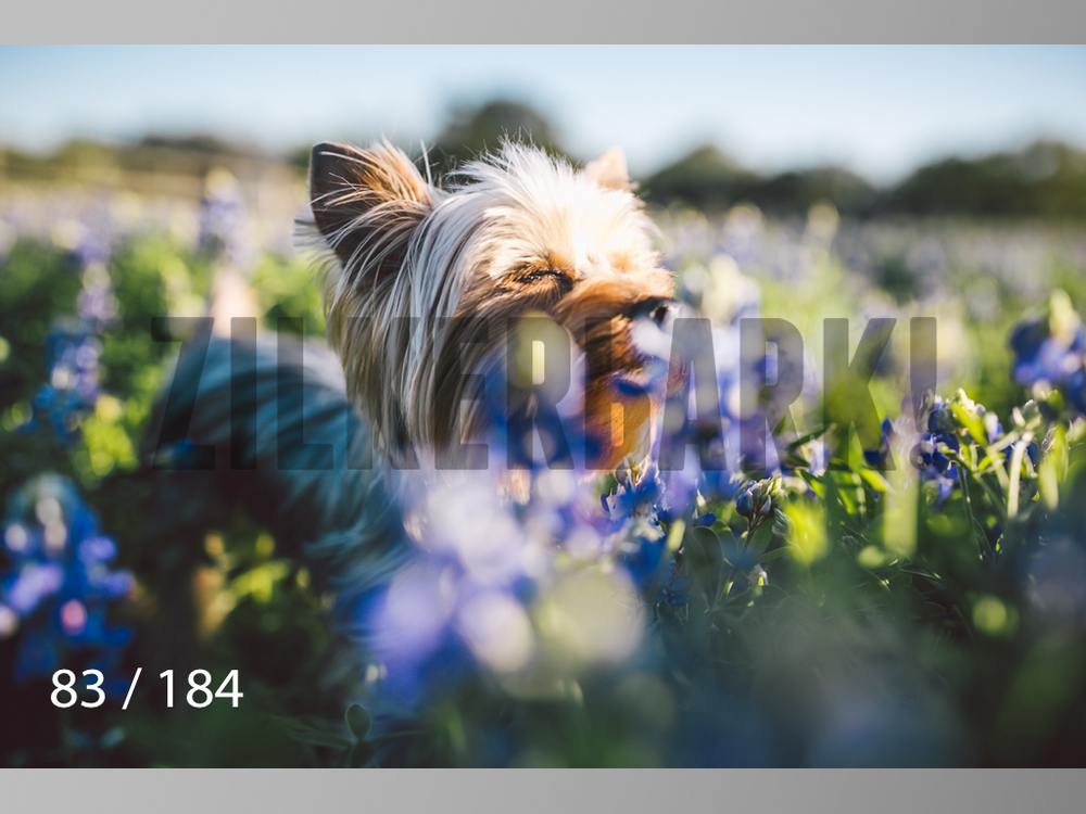 bluebonnet-083.jpg