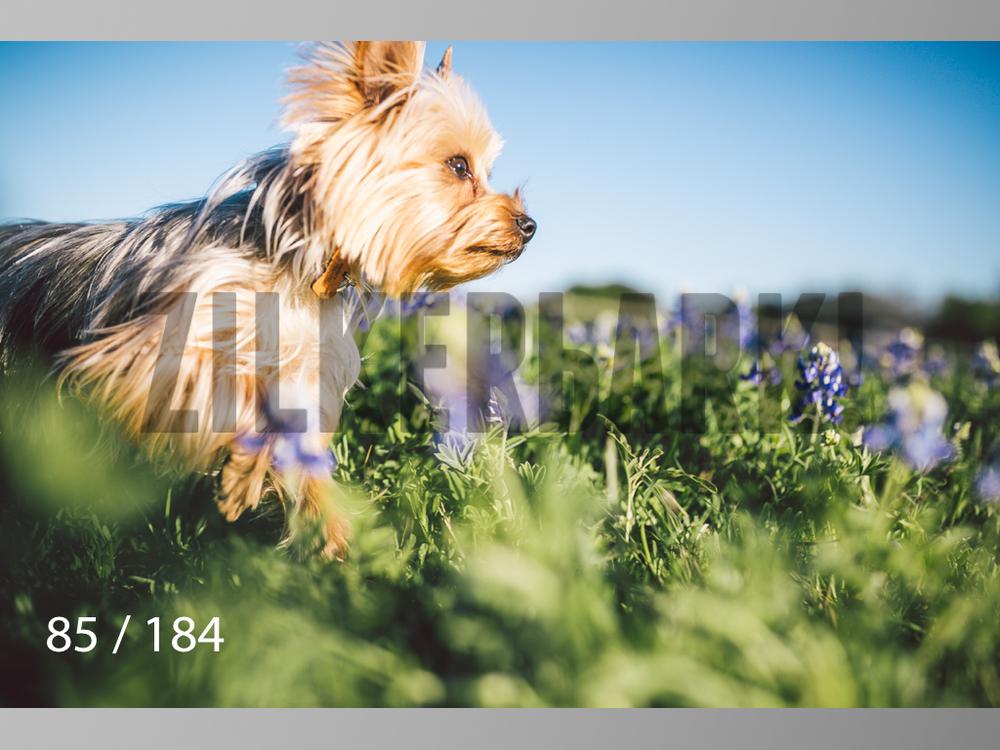 bluebonnet-085.jpg