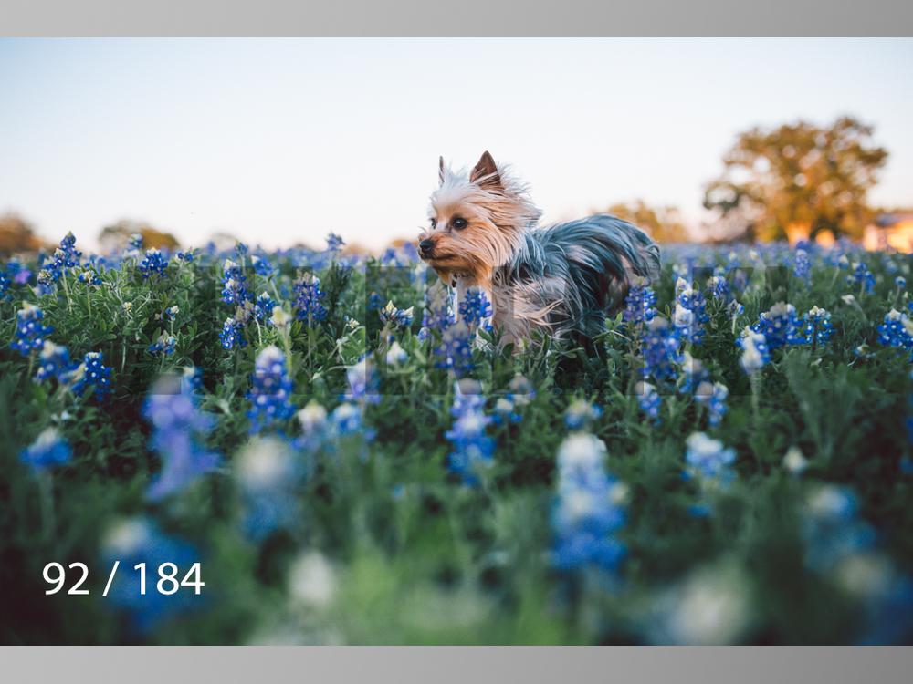bluebonnet-092.jpg