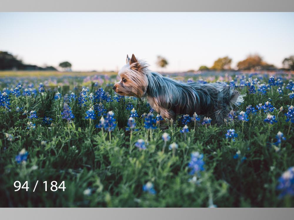 bluebonnet-094.jpg