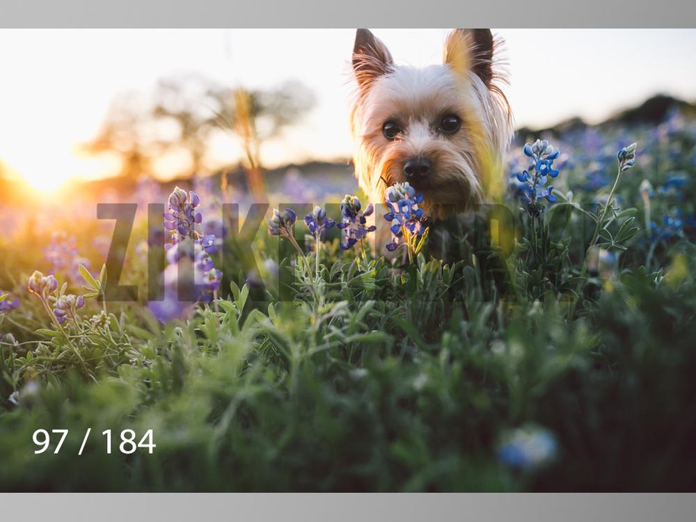 bluebonnet-097.jpg