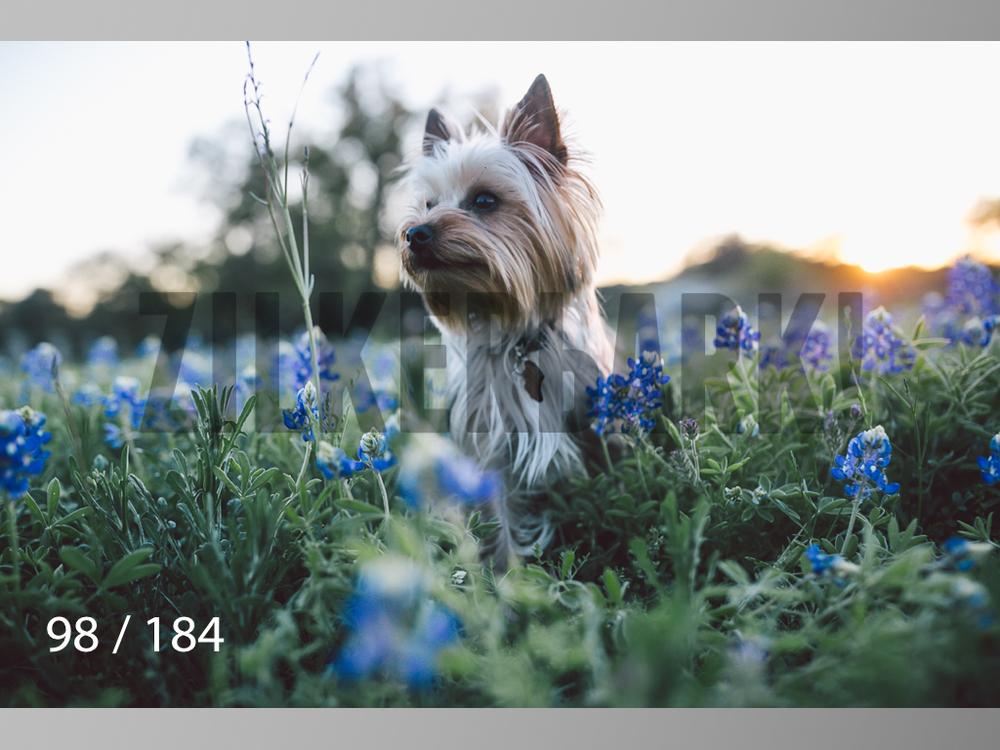 bluebonnet-098.jpg