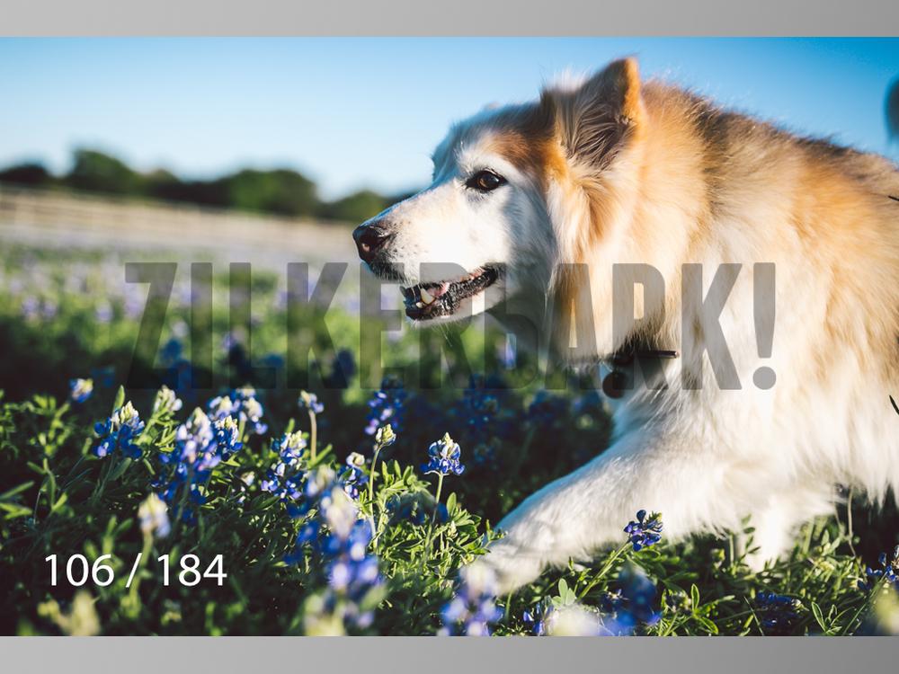 bluebonnet-106.jpg