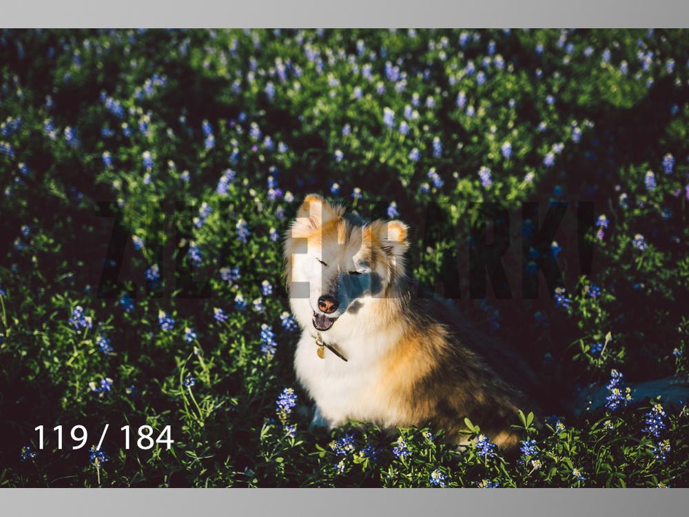 bluebonnet-119.jpg