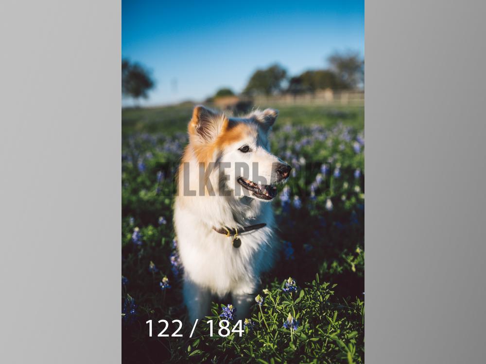 bluebonnet-122.jpg