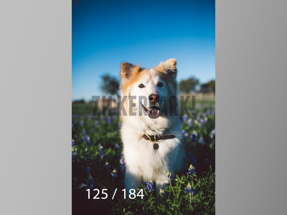 bluebonnet-125.jpg