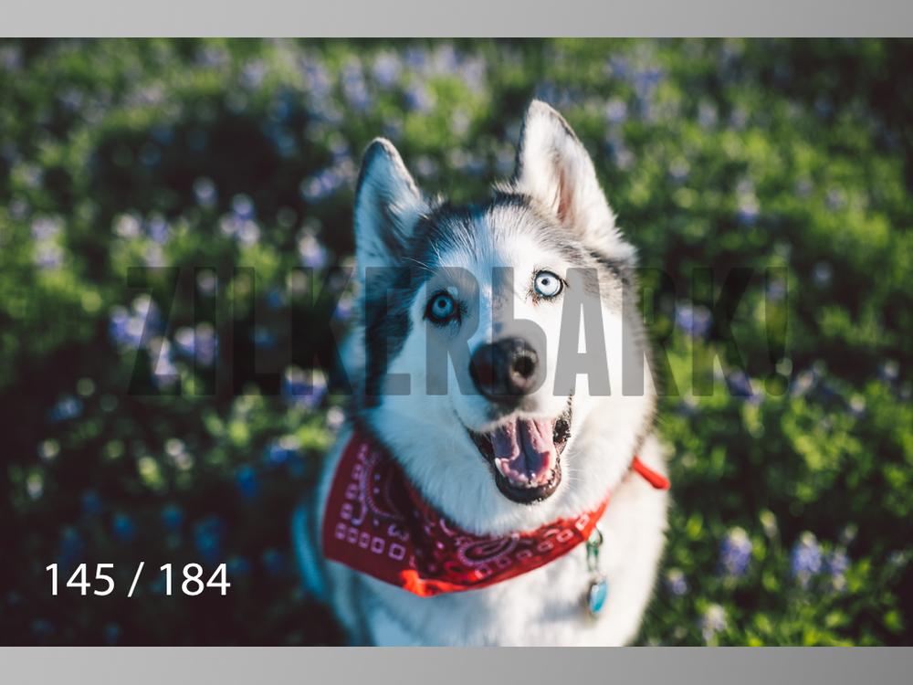 bluebonnet-145.jpg