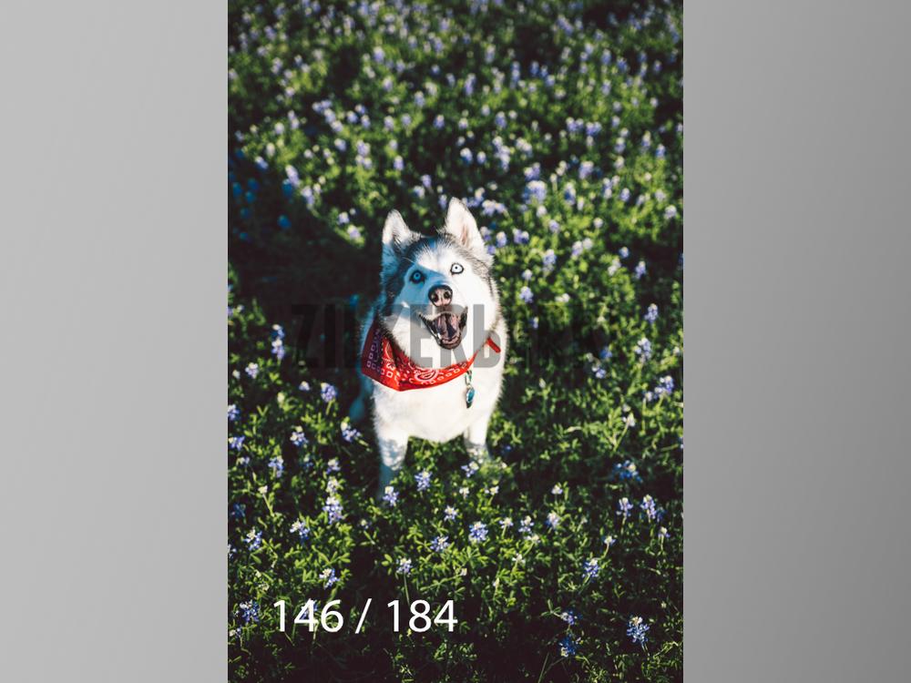 bluebonnet-146.jpg