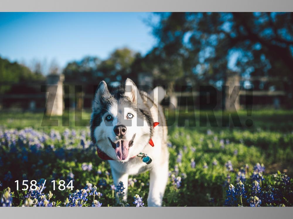 bluebonnet-158.jpg