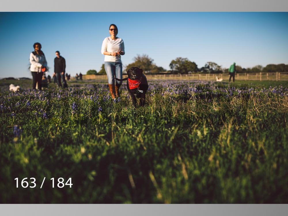 bluebonnet-163.jpg