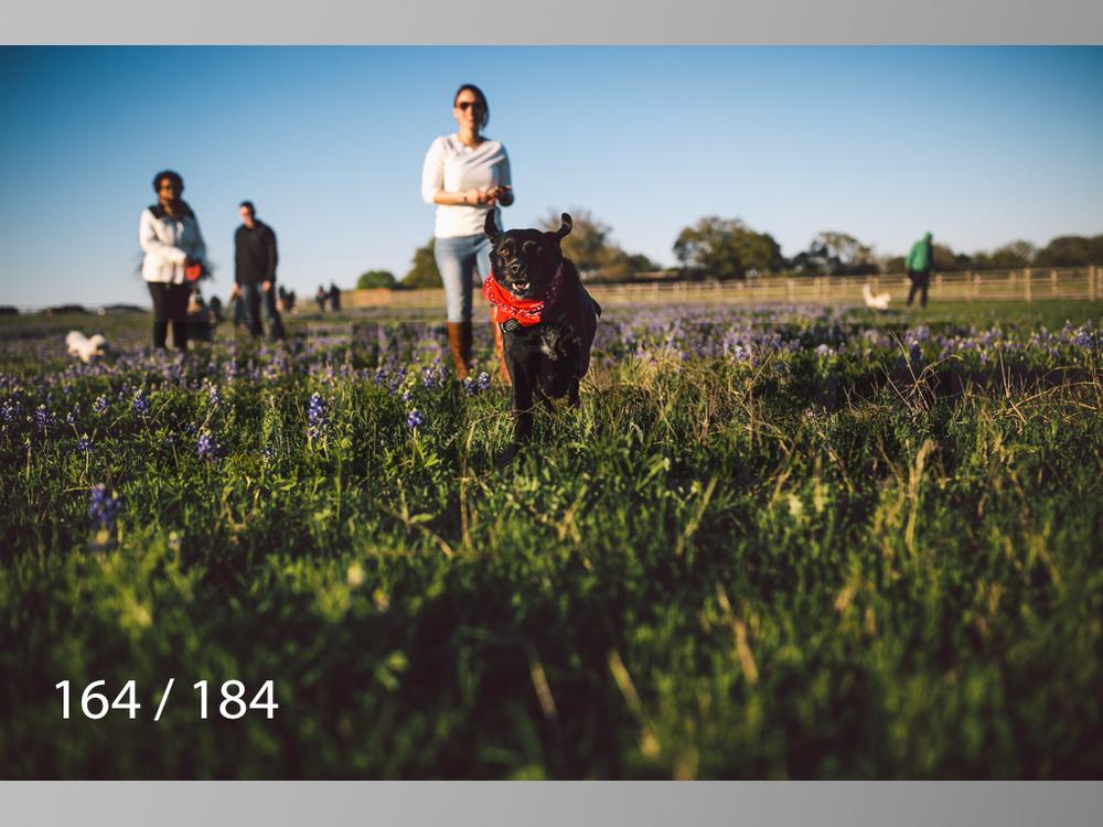 bluebonnet-164.jpg