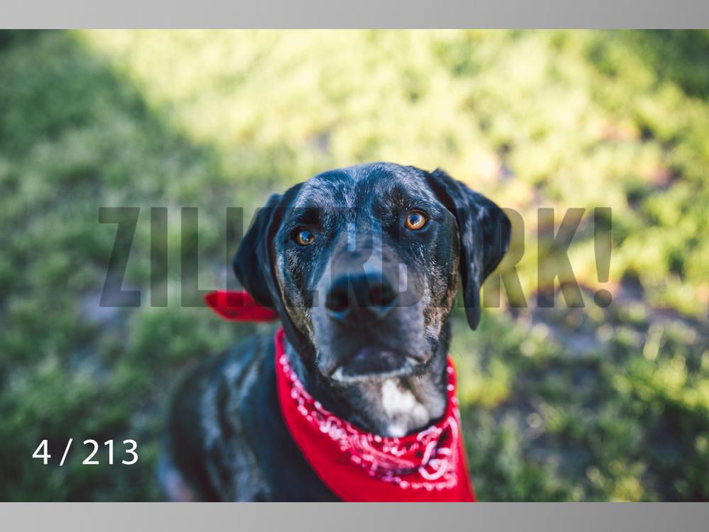 Dogs Rest WM-004.jpg