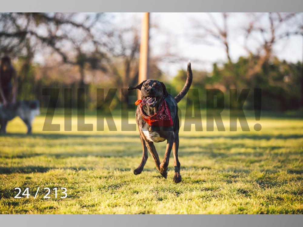 Dogs Rest WM-024.jpg