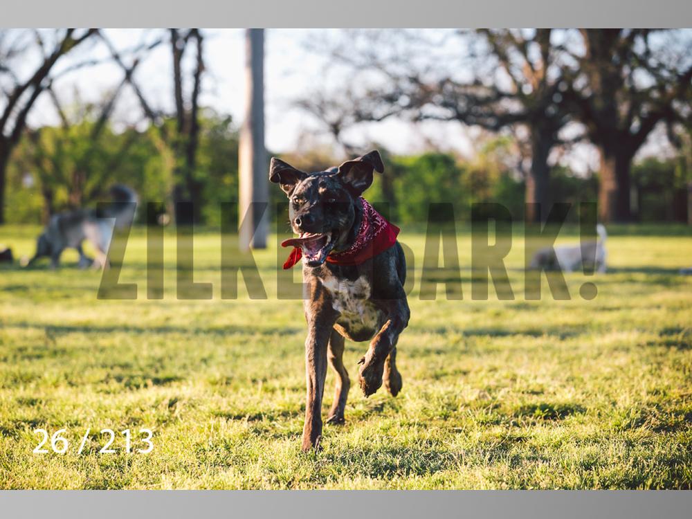 Dogs Rest WM-026.jpg