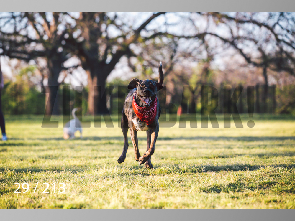 Dogs Rest WM-029.jpg