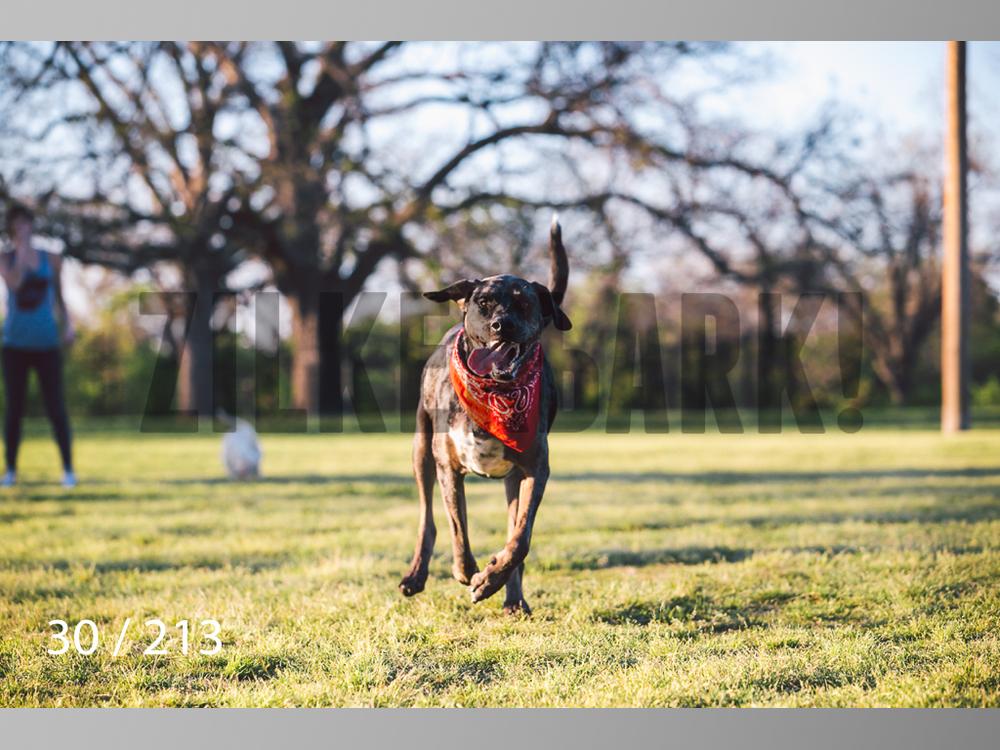 Dogs Rest WM-030.jpg