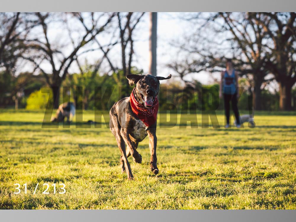 Dogs Rest WM-031.jpg