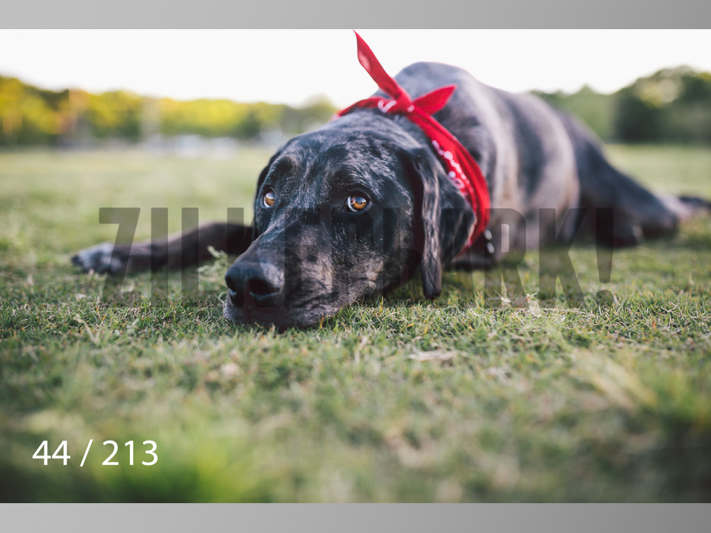Dogs Rest WM-044.jpg