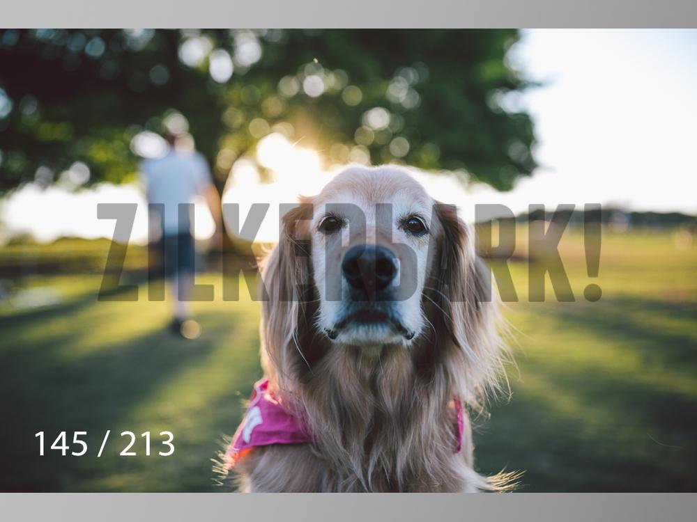 Dogs Rest WM-145.jpg