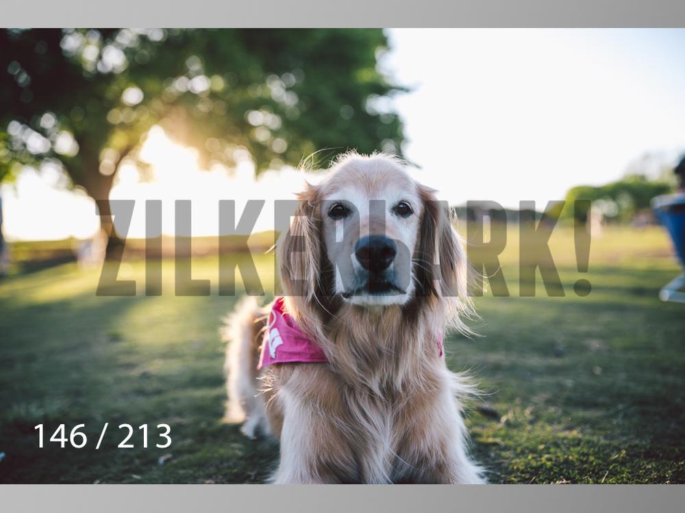 Dogs Rest WM-146.jpg