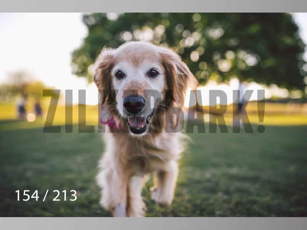 Dogs Rest WM-154.jpg