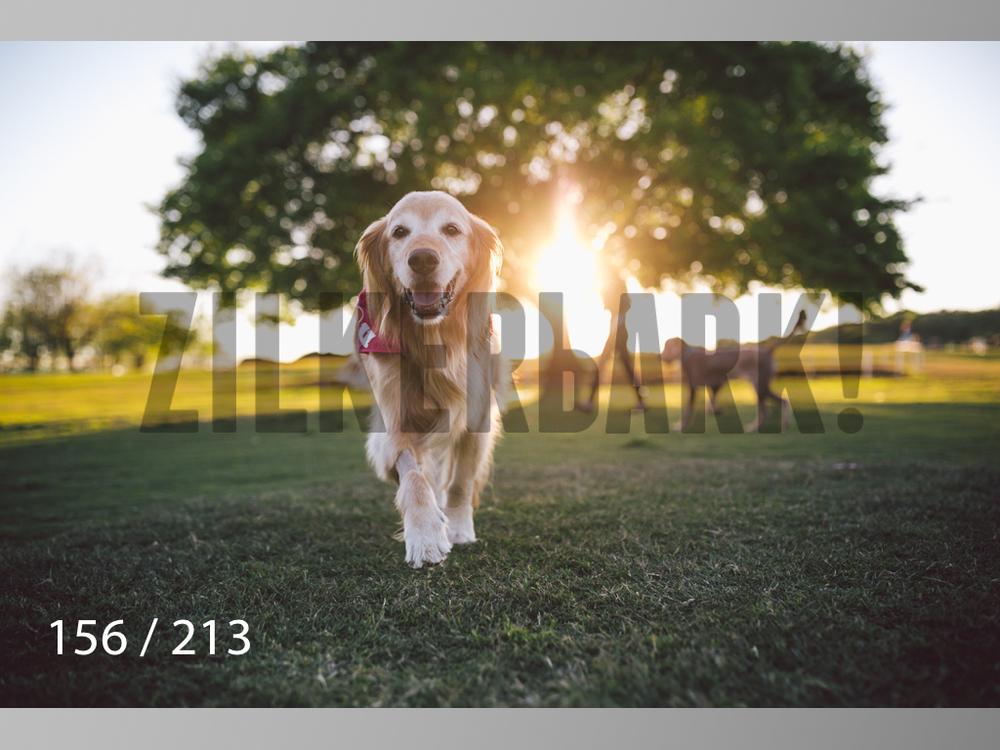 Dogs Rest WM-156.jpg