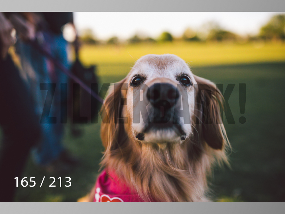 Dogs Rest WM-165.jpg