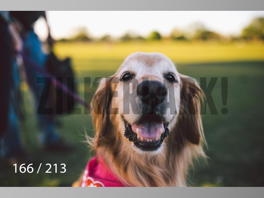 Dogs Rest WM-166.jpg