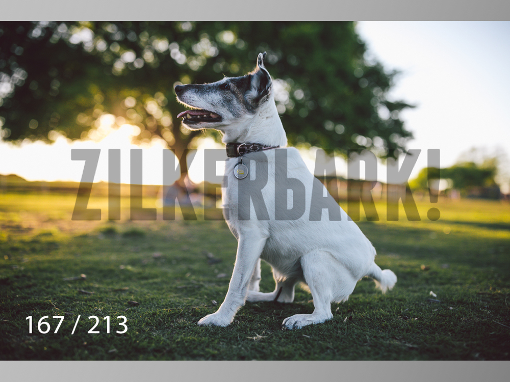 Dogs Rest WM-167.jpg