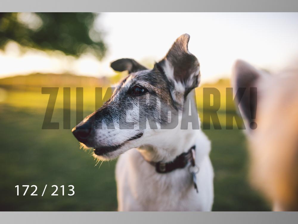 Dogs Rest WM-172.jpg