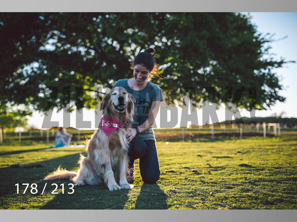 Dogs Rest WM-178.jpg