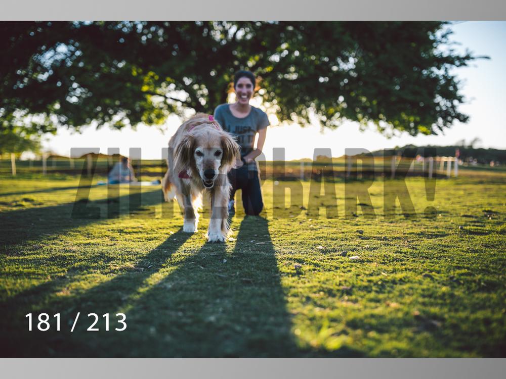 Dogs Rest WM-181.jpg