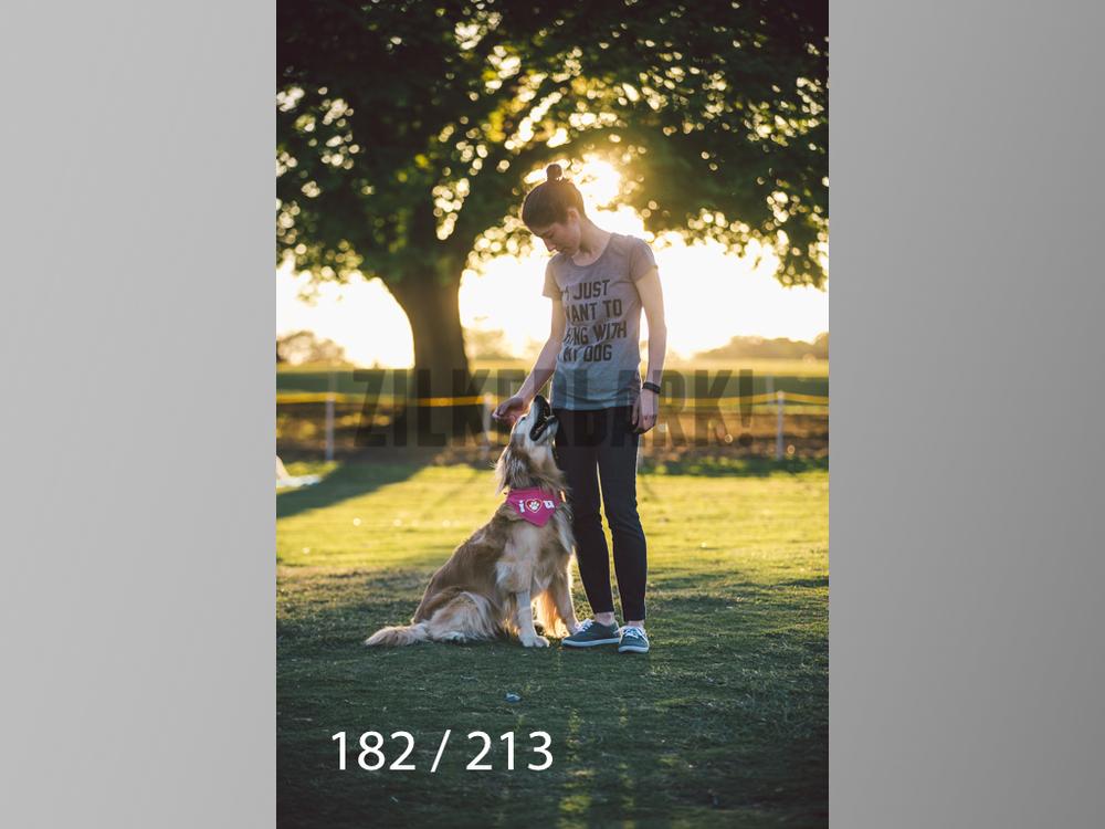 Dogs Rest WM-182.jpg