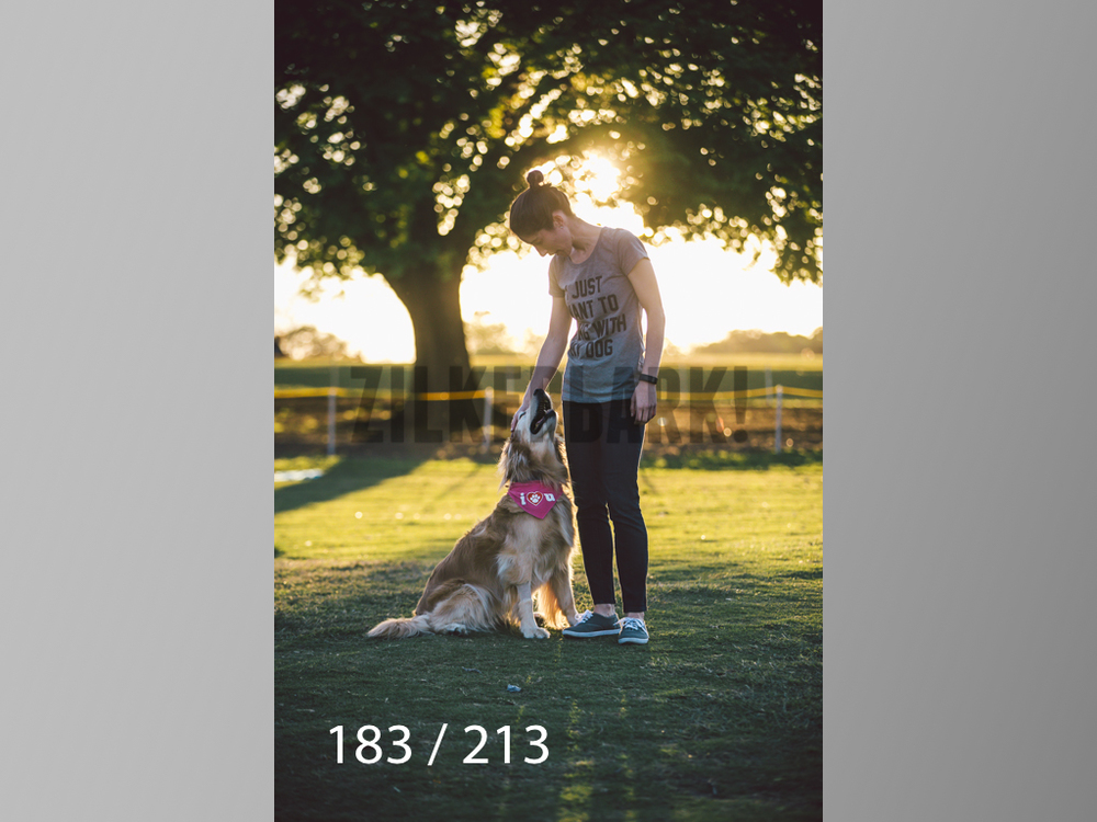 Dogs Rest WM-183.jpg