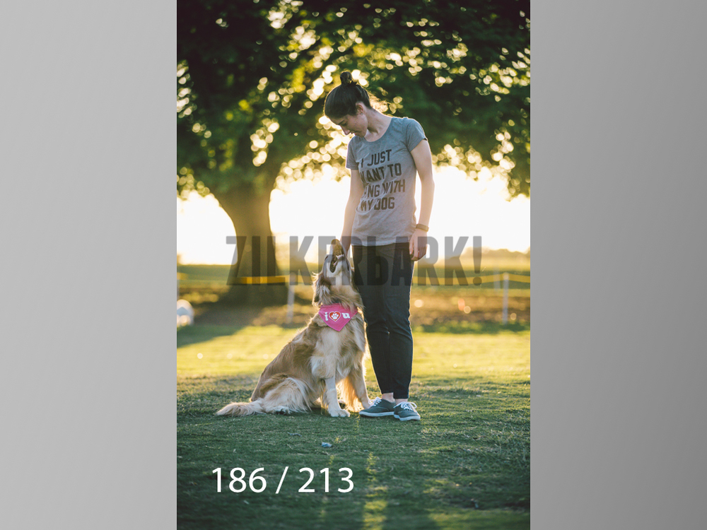 Dogs Rest WM-186.jpg