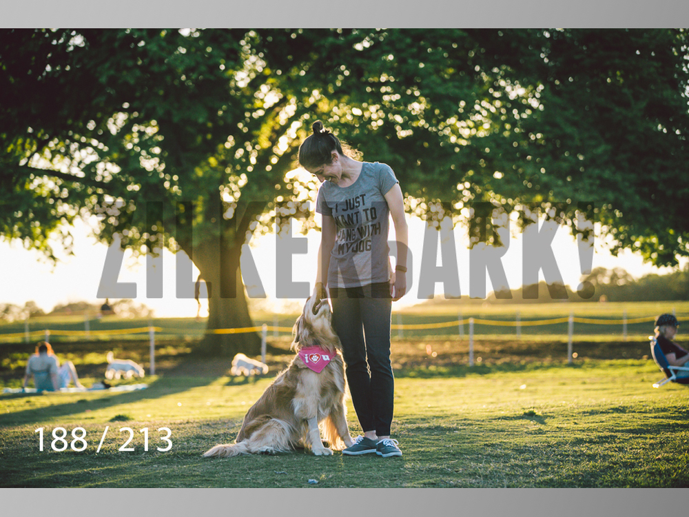 Dogs Rest WM-188.jpg