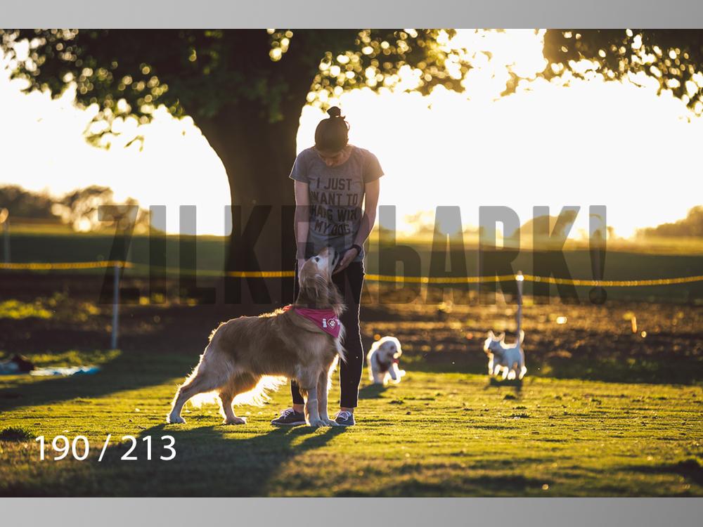Dogs Rest WM-190.jpg