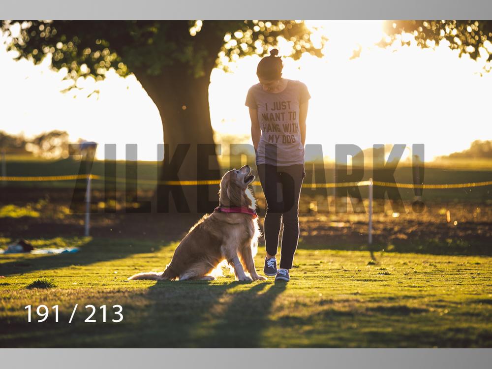 Dogs Rest WM-191.jpg