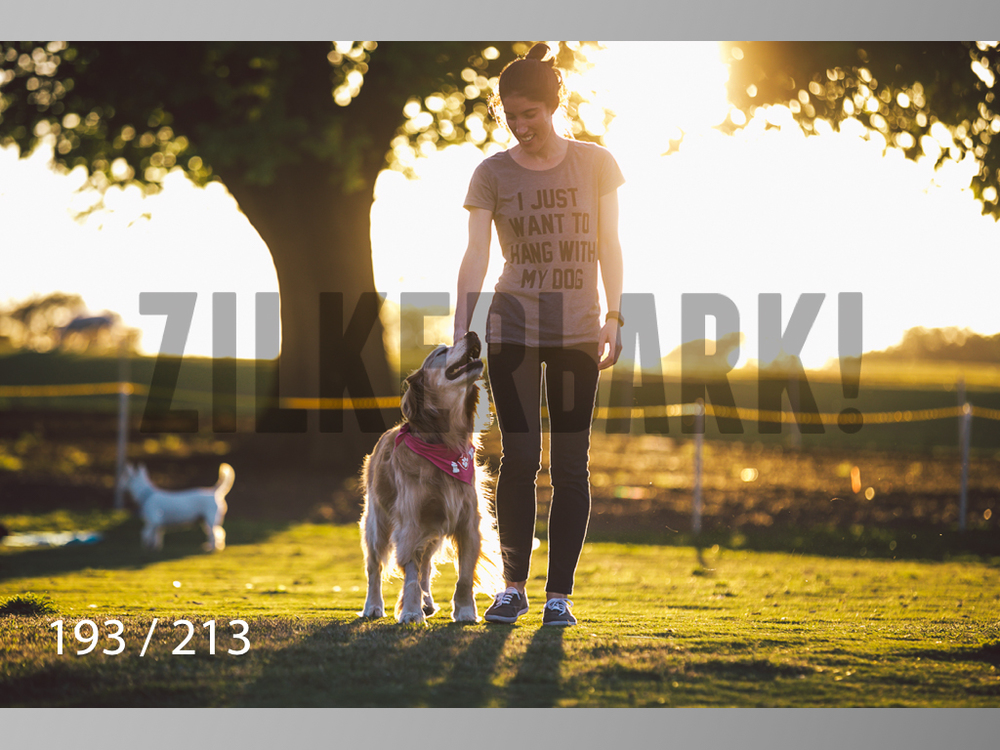 Dogs Rest WM-193.jpg