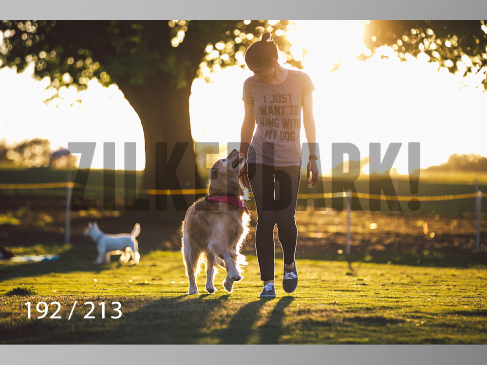 Dogs Rest WM-192.jpg