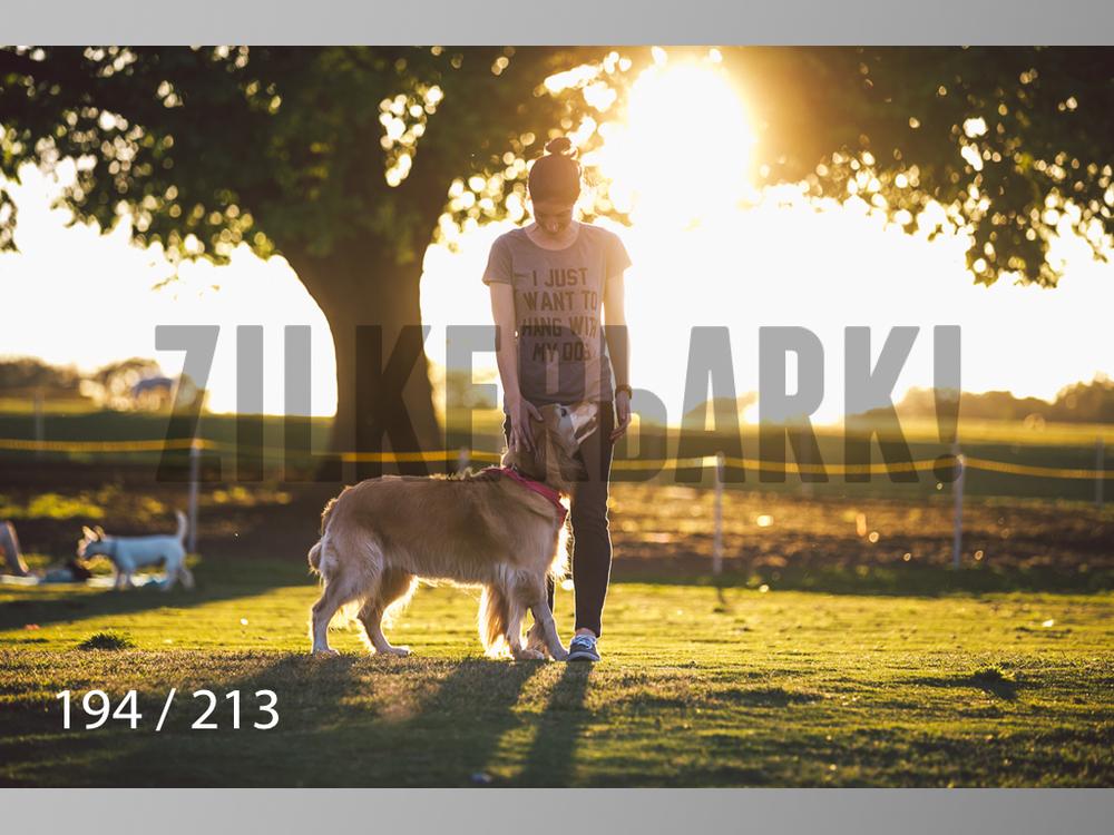 Dogs Rest WM-194.jpg