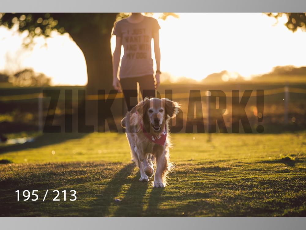 Dogs Rest WM-195.jpg