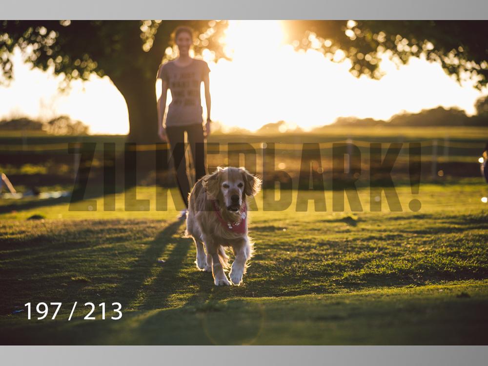 Dogs Rest WM-197.jpg