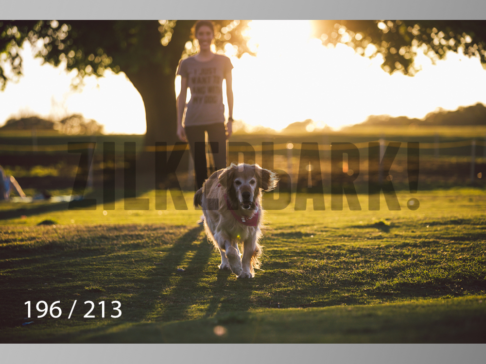 Dogs Rest WM-196.jpg