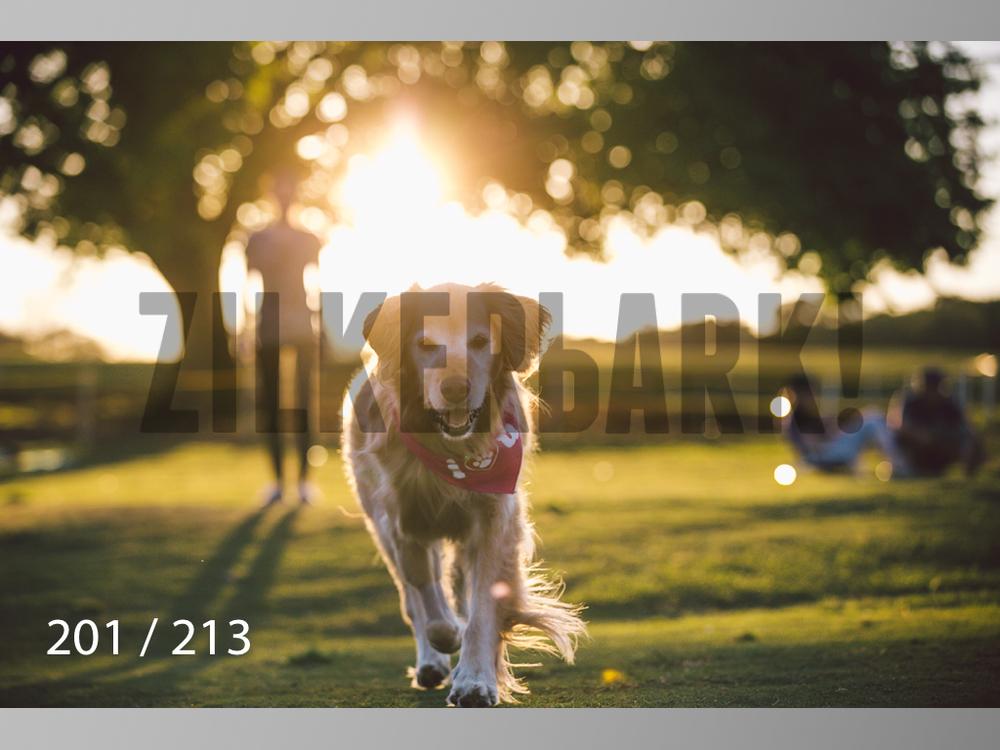 Dogs Rest WM-201.jpg