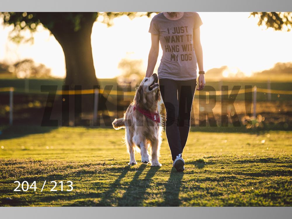 Dogs Rest WM-204.jpg