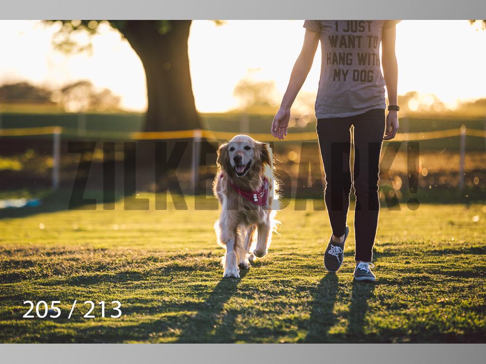 Dogs Rest WM-205.jpg